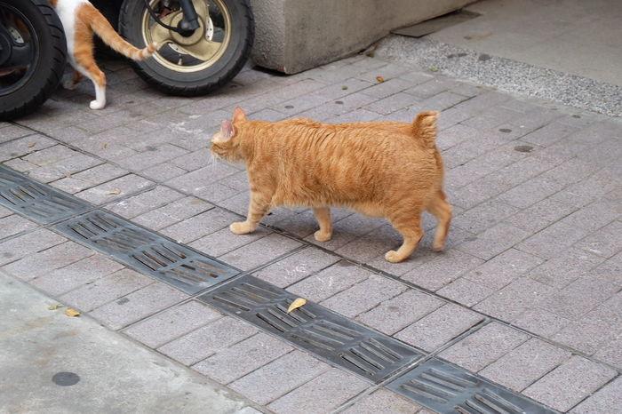Cat #cat #Kitty Domestic Cat #Wallpaper Stray Animal #Cats #lovecats Animal Animal Themes Pets Mammal Domestic Domestic Animals Street City Feline