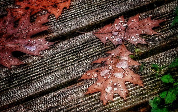 Autumn Autumn Autumn Colors Autumn Leaves Close-up Fall Fall Beauty Fall Colors Leaf Leaves Nature Rain Raindrops Seasons Showcase: November