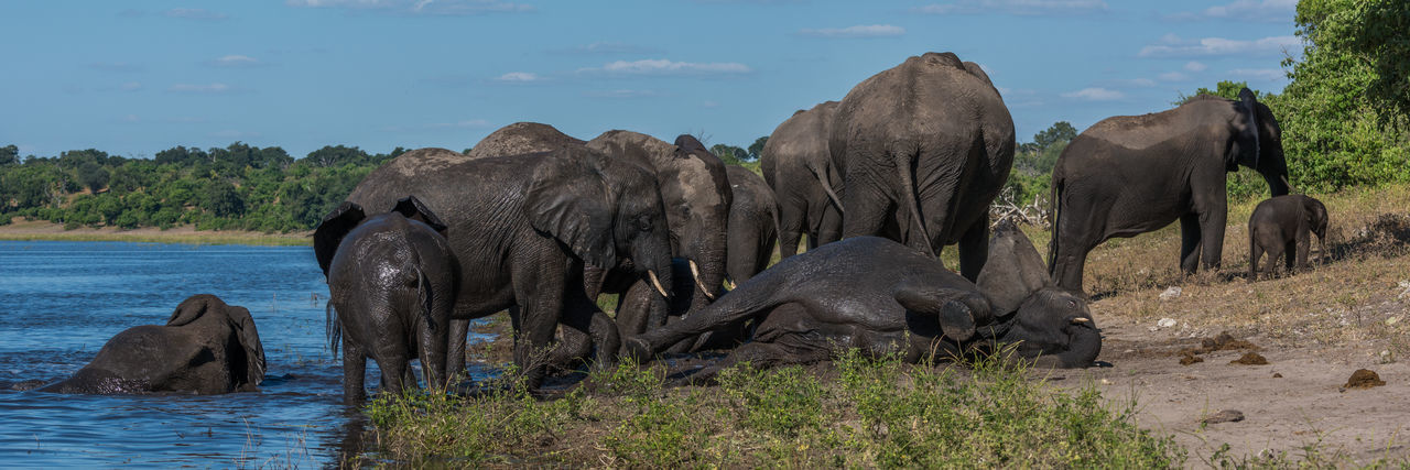Elephant Family By River Against Sky