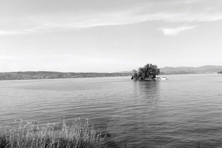 Smallest Lützelau Island Lake Züri EyeEm Selects Water Sky Tranquility Tree Beauty In Nature Scenics - Nature Tranquil Scene No People Non-urban Scene Idyllic Cloud - Sky Nature