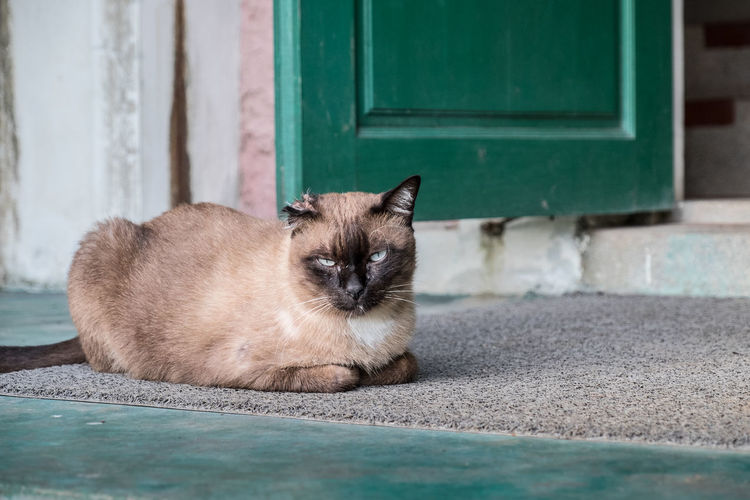 Portrait of cat staring while sitting on doormat