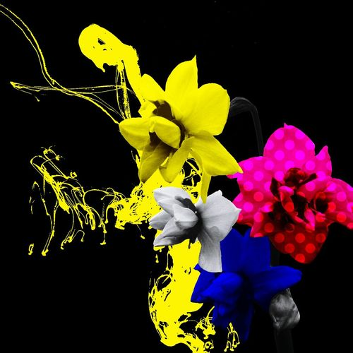 Art Color Flower Edit Yellow