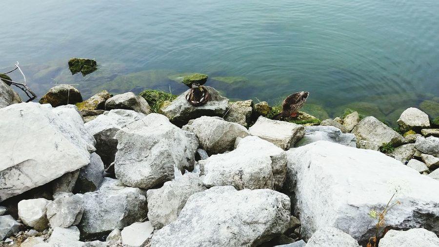 Marina Duck