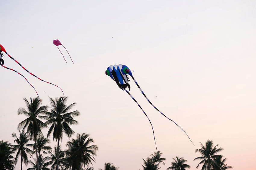 SAM-RAT BEACH - February 10, 2018: Thailand International Kite Festival on February 5, 2018 in Sam-rat beach, Suratthani province Thailand. SAM-RAT BEACH - February 10, 2018: Thailand International Kite Festival On February 5, 2018 In Sam-rat Beach, Suratthani Province Thailand. Animal Themes Beauty In Nature Blue Clear Sky Close-up Day Flower Growth Low Angle View Nature No People Outdoors Palm Tree Plant Sky Tree