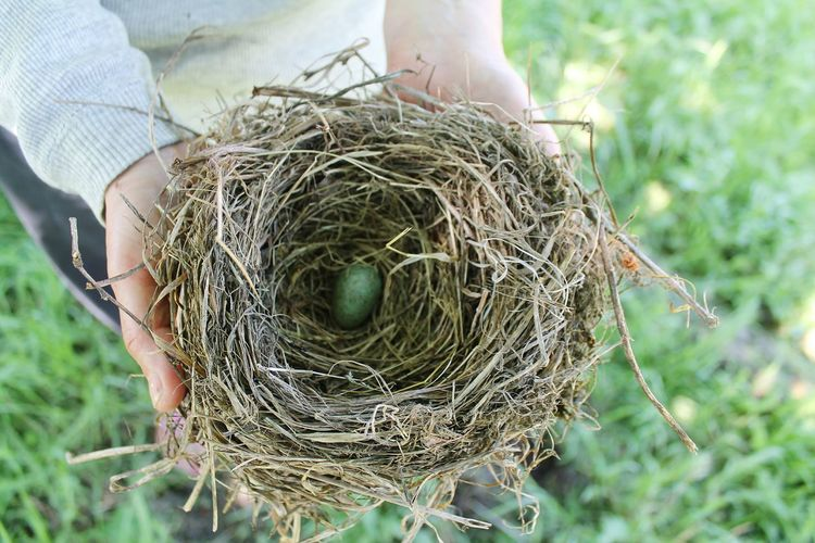 Close-Up Of Bird's Egg In Nest