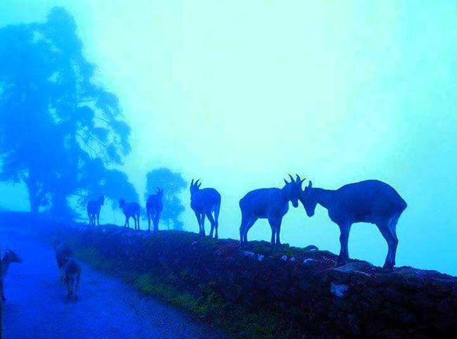 Good Morning Morning Dew Animals Awesome! Feeling Cool  Fun