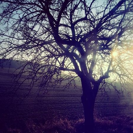 Tree Sunset Nature Way to benesov czechrepublic sunny weather busphoto tagsforlikes instaphoto