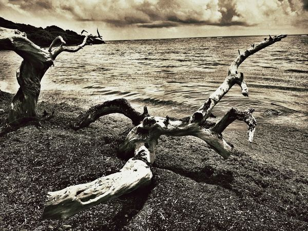 Life Is A Beach Taking Photos Hugging A Tree Art Is Dead