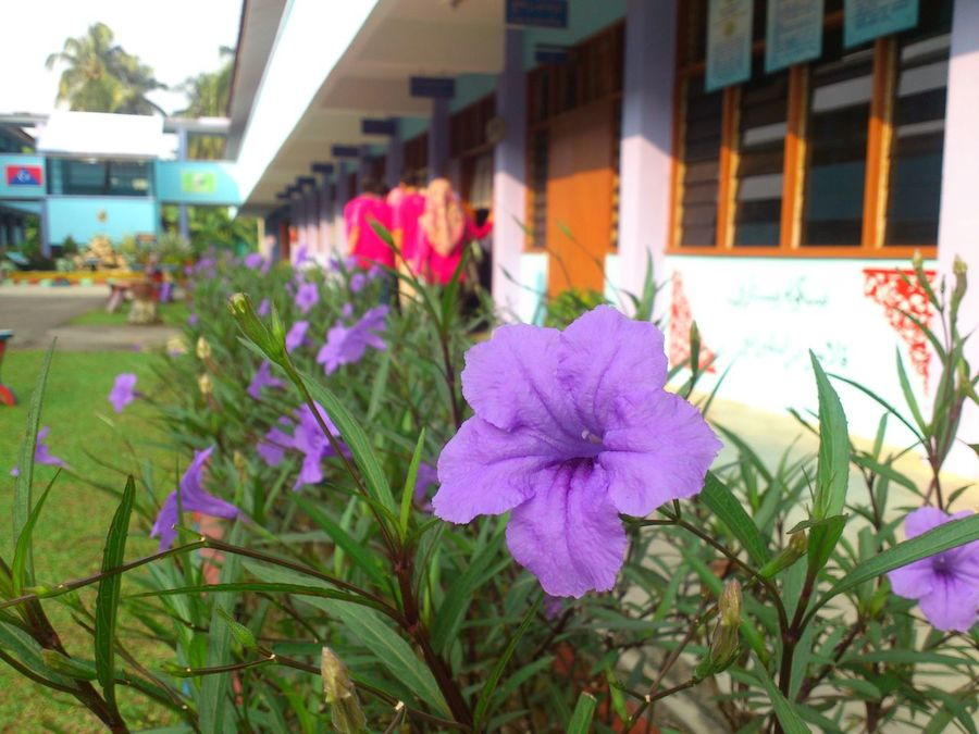 Beauty In Nature Close-up Flower Freshness Nature Petal Plant Purple Flower School Scene Xperia Ray