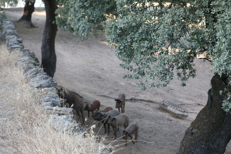 High angle view of horses walking on land