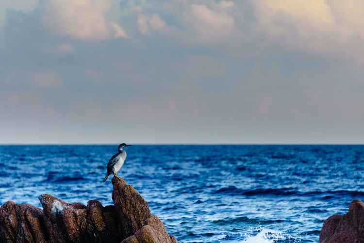 Animals In The Wild Cormorant  Sky And Clouds Animal Animal Themes Animal Wildlife Beach Beauty In Nature Bird Close-up Cloud - Sky Clouds And Sky Day Horizon Over Water Landscape Nature No People Outdoors Scenics Sea Sky Sunset Tranquil Scene Tranquility Water EyeEmNewHere Perspectives On Nature An Eye For Travel The Great Outdoors - 2018 EyeEm Awards