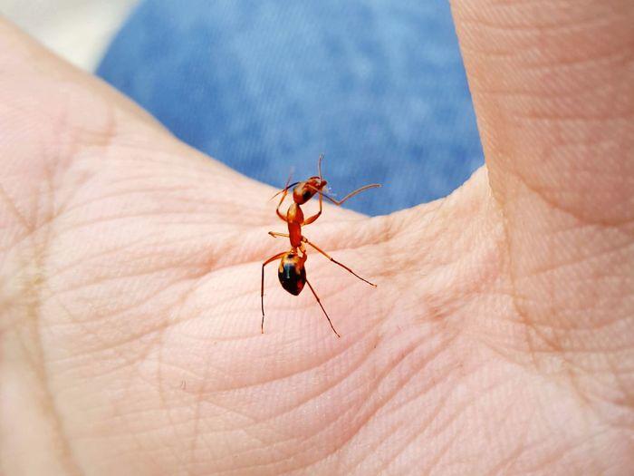 ant man Human