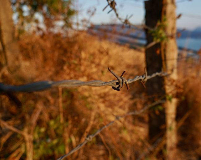 Golden Hour Barbed Wire Safety Selective Focus Protection Fence Wire No People Security Barrier Sharp Boundary Close-up Outdoors Metal