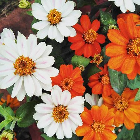 Colors! Redmi 2