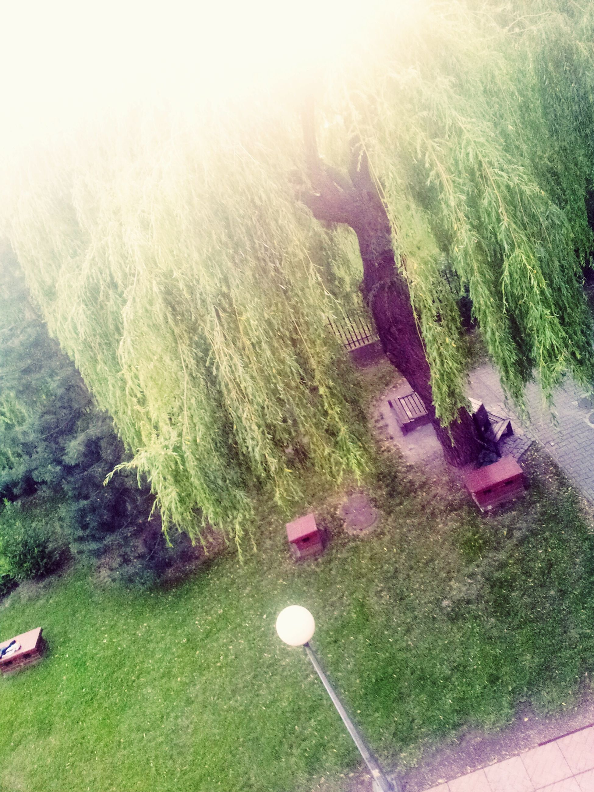 grass, green color, leisure activity, sunlight, lifestyles, sun, sunbeam, lens flare, tranquility, men, water, tranquil scene, nature, beauty in nature, person, growth, tree, scenics, landscape