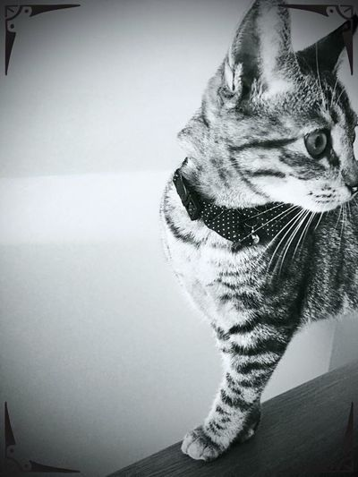 Monochrome Cat