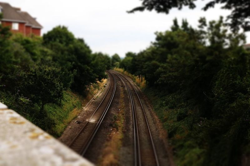 Day Growth Nature No People Outdoors Public Transportation Rail Transportation Railroad Track Railway Track Sky The Way Forward Transportation Tree