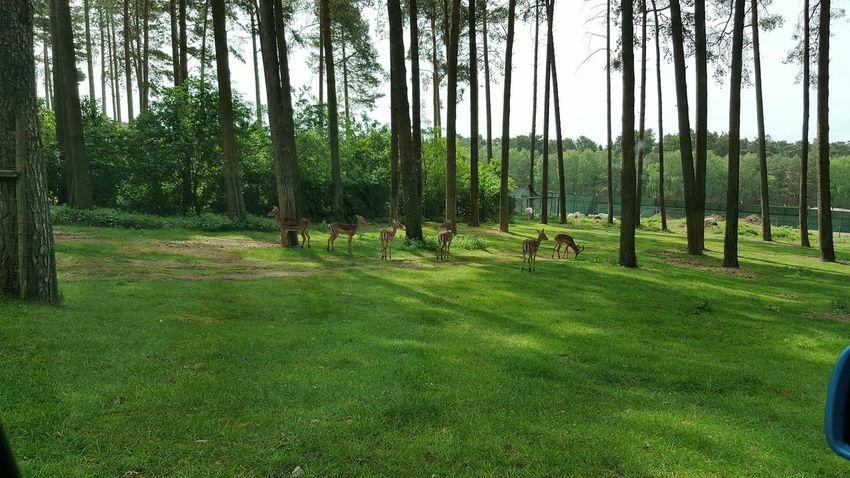 Wild Serengeti-Park, Hodenhagen
