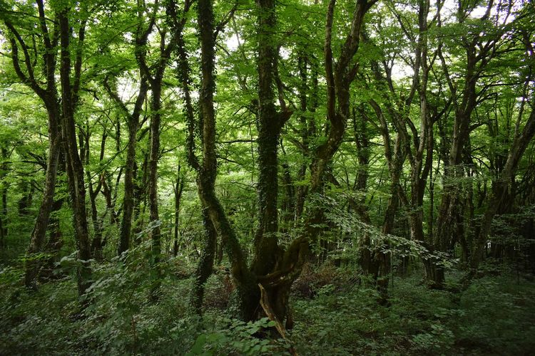Lush forest in