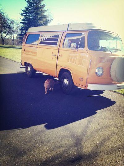 Hippies!