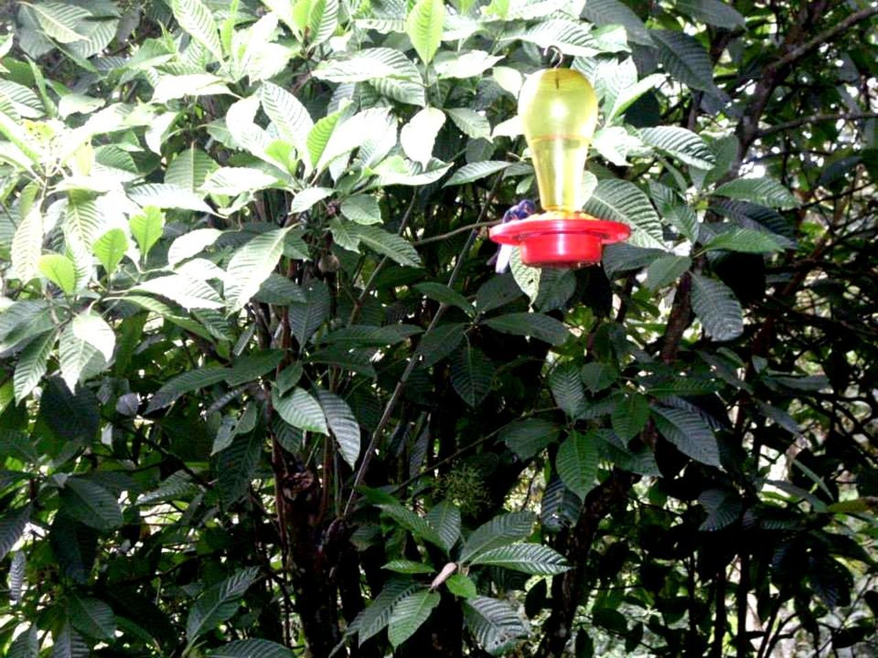 growth, leaf, plant, nature, green color, red, no people, flower, petal, beauty in nature, day, outdoors, freshness, fragility, tree, close-up, blooming, flower head