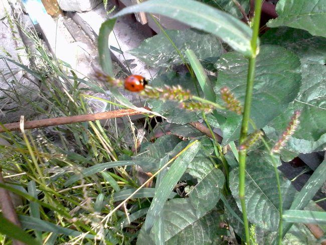 Green Plants Ladybug Ladybeetle Unedited Wolfzuachis Eyeem Market
