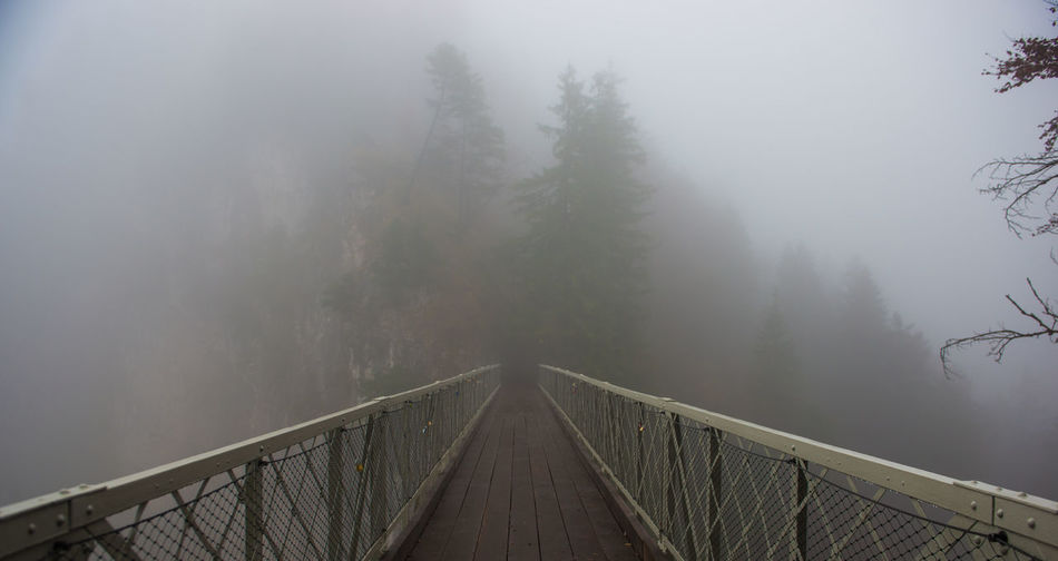 Bridge and Fog in forest Fog Tree Plant Bridge Cold Temperature Nature Connection Bridge - Man Made Structure Architecture Railing Beauty In Nature Built Structure Tranquil Scene Tranquility The Way Forward Forest Scenics - Nature Winter No People Footbridge Outdoors Diminishing Perspective