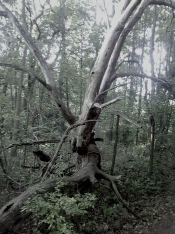 Broken down tree. Actually looks really cool! Tree Broken Spooky Dark