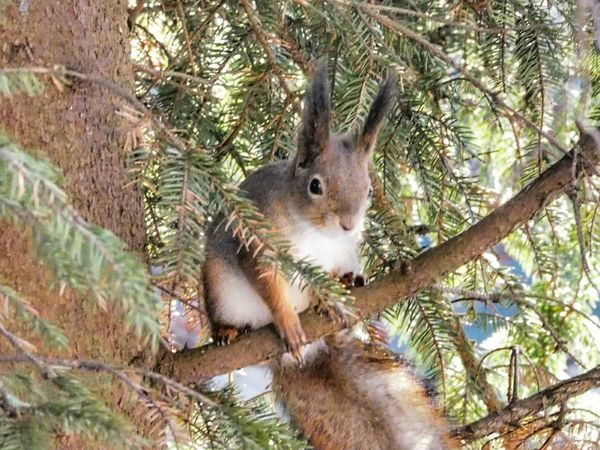 One Animal Nature Animals In The Wild Mammal Animal Themes Close-up Tree Winter Nature Outside Squirrel Closeup Squirrel On Branch Nature