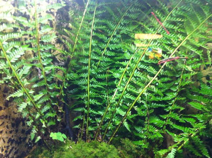 Beauty In Nature Close-up Day Fern Forest Freshness Green Color Growth Leaf Nature No People Outdoors Plant