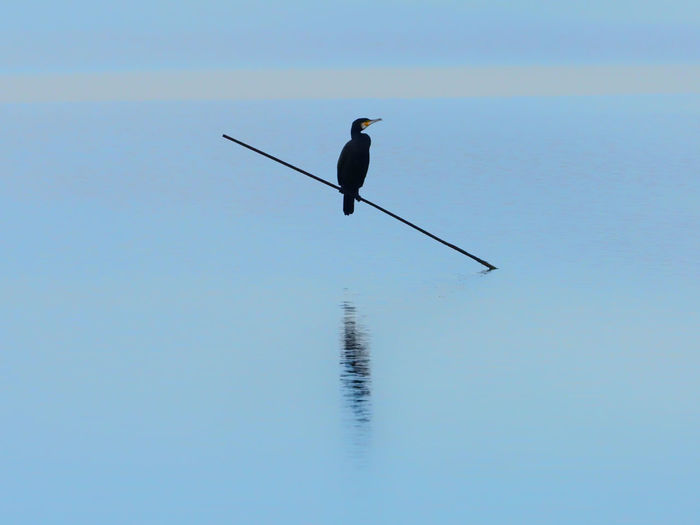 Low angle view of bird perching on a clear sky