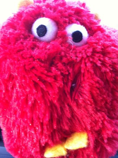 Red Close-up Looking At Camera One Animal Bird Animal Body Part Animal Themes Portrait No People Indoors  Day
