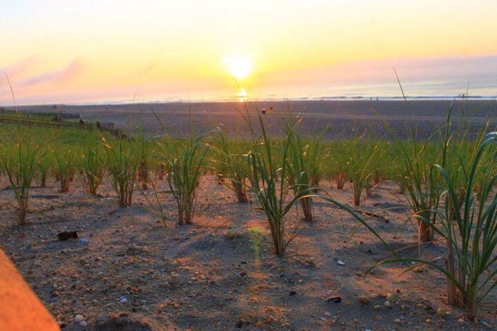 Sun Sunset Grassy Beach Sand Water Sunsetreflections Sunrise Beauty In Nature Beachphotography