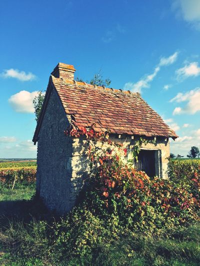 The old toolshed vineyard in autumn Architecture Sky Day Outdoors Nature Tree Vine Full Frame Fresh Beautiful Background Landscape Beauty In Nature Autumn Nature Leaf Fallen Leaves Plant Farm Wine Vineyard france Europe Tours Colorful Leaves In Autumn Toolshed cabanne Wall roof