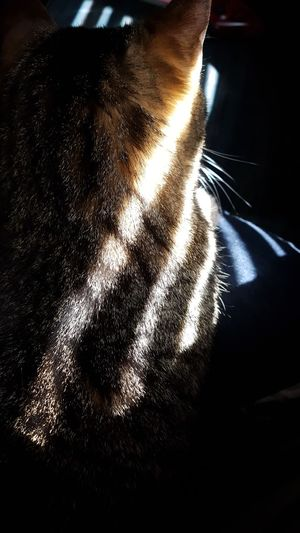 Whisker Light And Shadow Taking Photos Hello World Hanging Out Perspectives Cat Domestic Animals Domestic Cat Close-up