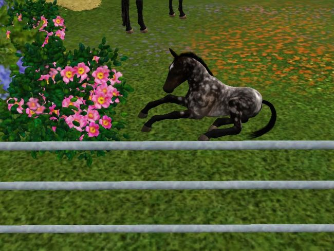 Thesims3 Sims3pets Sims 3 Sims3 Fohlen sims 3