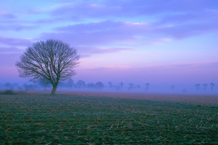Lonely bare tree in a countryside morning landscape Bare Tree Beauty In Nature Cloud - Sky Environment Field Fog Grass Isolated Land Landscape Nature No People Non-urban Scene Outdoors Plant Scenics - Nature Sky Solitude Tranquil Scene Tranquility Tree