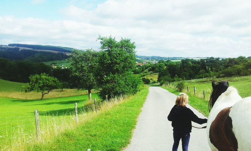 Horse Landscape Road Walking