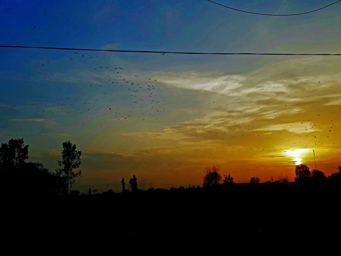Bird Flying Sunset Rural Scene Tree Togetherness Silhouette Flock Of Birds Mid-air Sky First Eyeem Photo