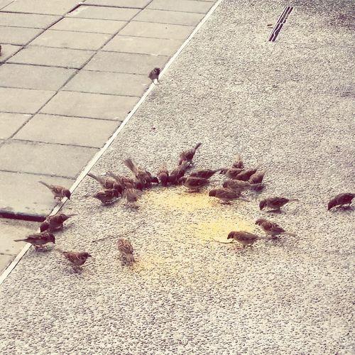 愛心 餵養 小鳥 午後 傍晚