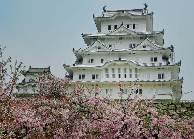 The white castle in Himeji is not only very old an exceptionally beautiful, it's also a great spot for cherry blossom viewing. Architecture Built Structure Low Angle View Building Exterior Tree No People Flower Castle Day Outdoors Travel Destinations Nature Japan Architecture Springtime Blossom Cherry Blossom Cherry Tree Japan Photography