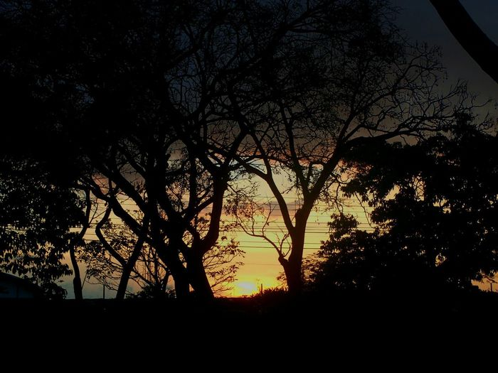 Taking Photos Beautiful Sunset Costa Rica Alajuela Summertime Trees Silhouettes Lovely Colors