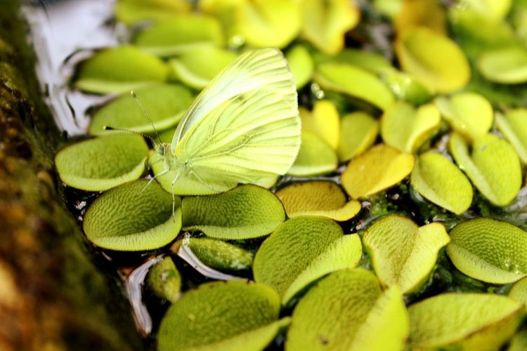 Butterfly Collection Butterfly ❤ Butterfly Farfalla Relaxing Green Enjoying Life Dancing Queen Beautifully Organized Mimetism Mimetizzazione In Corso