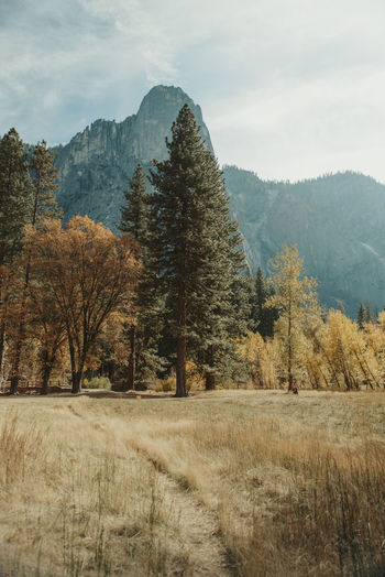 Yosemite Valley Yosemite Yosemite Valley Meadow Trees Nature Scenics - Nature Outdoors Mountains Field Tree Landscape No People Autumn Mountain Beauty In Nature