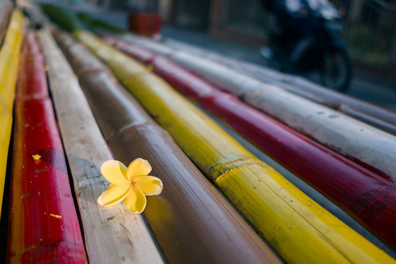 Flower of eternal sunshine Park Bench X-T20 Beauty In Nature Close-up Colorful Day Flower Petal Focus On Foreground Fujifilm_xseries Indoors  Multi Colored No People Petal Xf23mmf2 Yellow