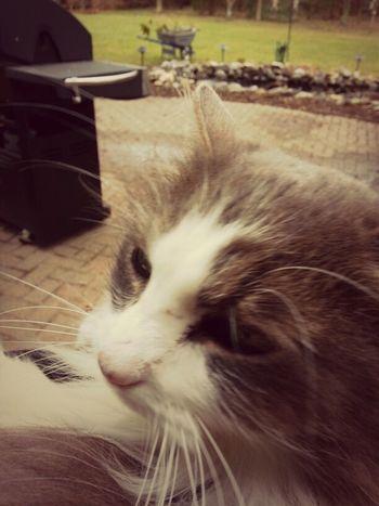 Meet my friend Kid, shes a wild cat