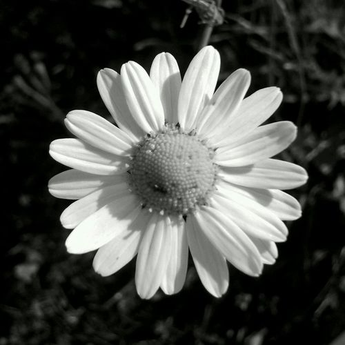 Phytotherapists rule! =) EyeEm Nature Lover Monochrome Flowerforfriends Bw_collection