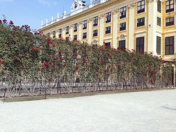 🌹 Roses Rose🌹 Garden Love Austria Beutiful  Autumn