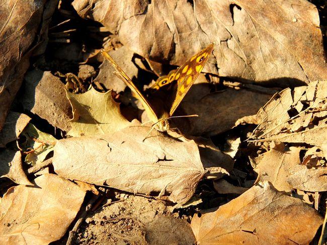 Hello World Open Edit EyeEm Taking Photos Batterfly  Animal Camouflage