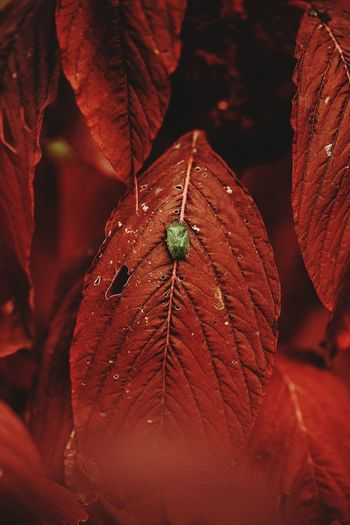 Close-up of insect on leaf during autumn